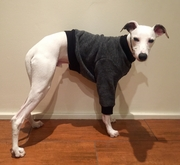 Whippet Smoky Tweed Heavy Fleece Sweater