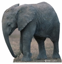 Baby Elephant Cardboard Cutout Life Size Standup