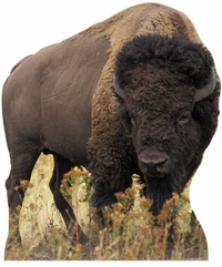 Bison Cardboard Cutout Life Size Standup