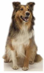 Collie the Dog Cardboard Cutout Life Size Standup