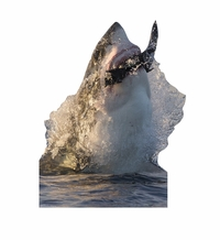 Great White Shark Cardboard Cutout Life Size Standup