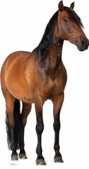 Horse Cardboard Cutout Life Size Standup