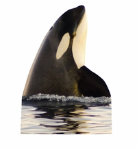 Killer Whale Cardboard Cutout Life Size Standup