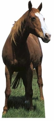 Mustang - Horse Cardboard Cutout Life Size Standup