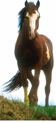 Mustang the Horse Cardboard Cutout Life Size Standup