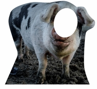 Pig Cardboard Cutout Life Size Stand-In
