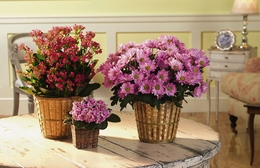 Assorted Blooming Plants in a Basket