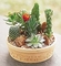 Assorted cacti and succulents Dishgarden