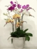 Assorted orchids 8 plants