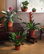 Bromeliads Tropical Exotic plant