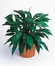 Pecae lily Evergreen in a basket decor