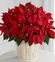 Christmas Red Poinsettia Basket (Large)