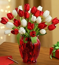 Jolly Holiday Tulips Flower