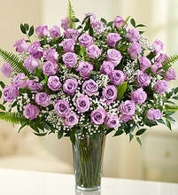 Long Stem Roses - Purple