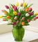 Multicolored Tulips, 20 Stems