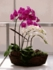 Orchids 5 stems