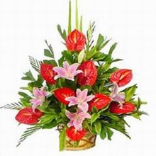 Red anthurium and sweet pink lily basket