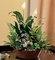 Sympathy Plants & Gift Baskets White Garden Plants