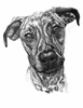 Apr 14 - Intro to Animal Portraiture with Gaella Materne
