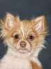 Mar 24 - Pastel Animal Portraits with Jane Steelman