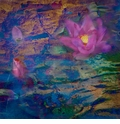 Waterlily Series