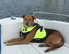 FirstWatch Dog PFD Life Vest