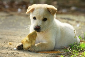 ~ 062211 Pets Can Reduce Stress, Cholesterol, Obesity