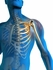 ~ 090811 The Little-Known Link Between Bone Health and Total Health