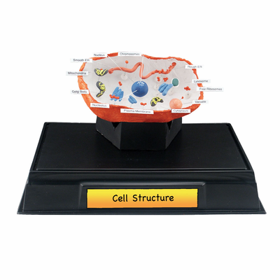Scene-A-Rama® Cell Structure Classroom Pack - Click to enlarge