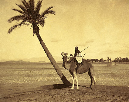 Algerian Desert Camel Rider Late 1800s Photo Print