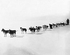 All Alaska Dog Sled Team, Nome 1914 Photo Print for Sale
