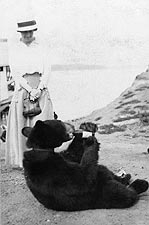 Bear & Bottle Yukon River Alaska 1900 Photo Print for Sale