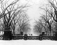 Central Park New York After Snow Fall 1906 Photo Print for Sale
