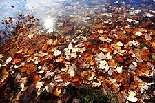 Colorful Autumn Leaves Photo Print for Sale
