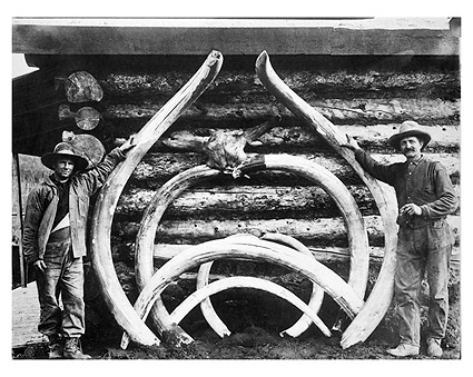 Extinct Mastodons Bones Alaska Early 1900s Photo Print