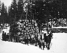 Forest Logging w/ Sleigh & Horses 1910 Photo Print for Sale