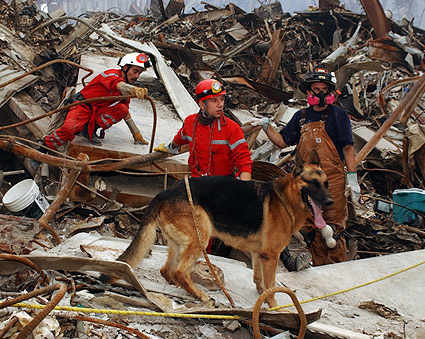 French Urban Search and Rescue 9/11 Photo Print