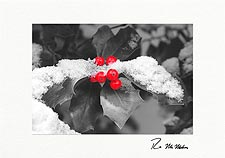 Winter Holly Personalized Christmas  Cards