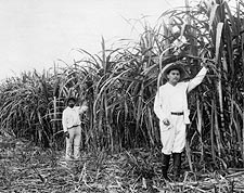 Mexican Sugar Plantation Worker Mexico  Photo Print for Sale
