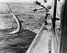 Swordfish Catching & Tagging Summer Fishing Photo Print for Sale