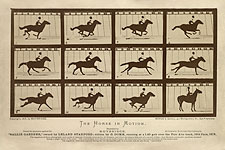 The Horse in Motion by Eadweard Muybridge Photo Print for Sale