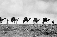 Train of Camels 1940s Photo Print for Sale