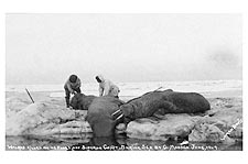 Walrus Hunting in Bering Sea 1909 Siberia Photo Print for Sale