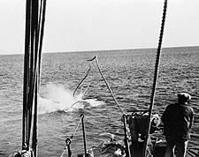 Whaler's Whaling Harpoon Hits Humpback Whale 1930s Photo Print for Sale