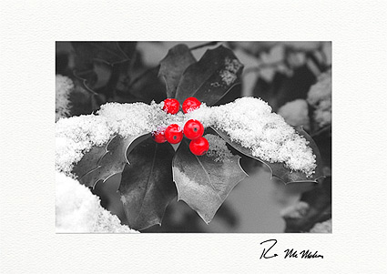 Winter Holly Christmas Individual Holiday Cards
