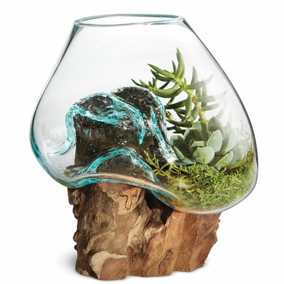 Molten Glass and Teak Terrarium