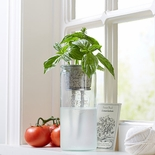 Basil Eco Planter