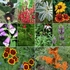 Birds Bees and Butterflies Seed Collection