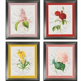 Botanical Framed Prints
