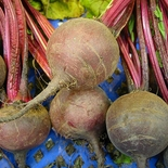 Early Blood Turnip-rooted Beet Seeds (<i>Beta vulgaris cv.</i>)